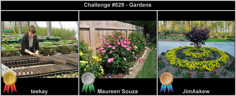 IMAGE: http://rpolitsr.rafaelpolit.com/potngserieschall/529_thumbnails_winners.jpg