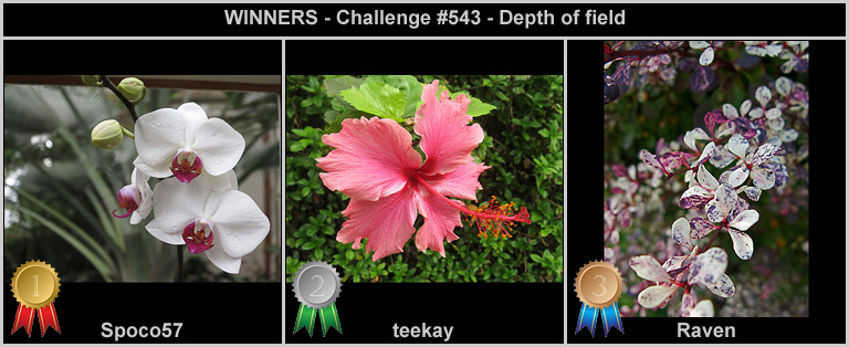 IMAGE: http://rpolitsr.rafaelpolit.com/potngserieschall/543_thumbnails_winners.jpg